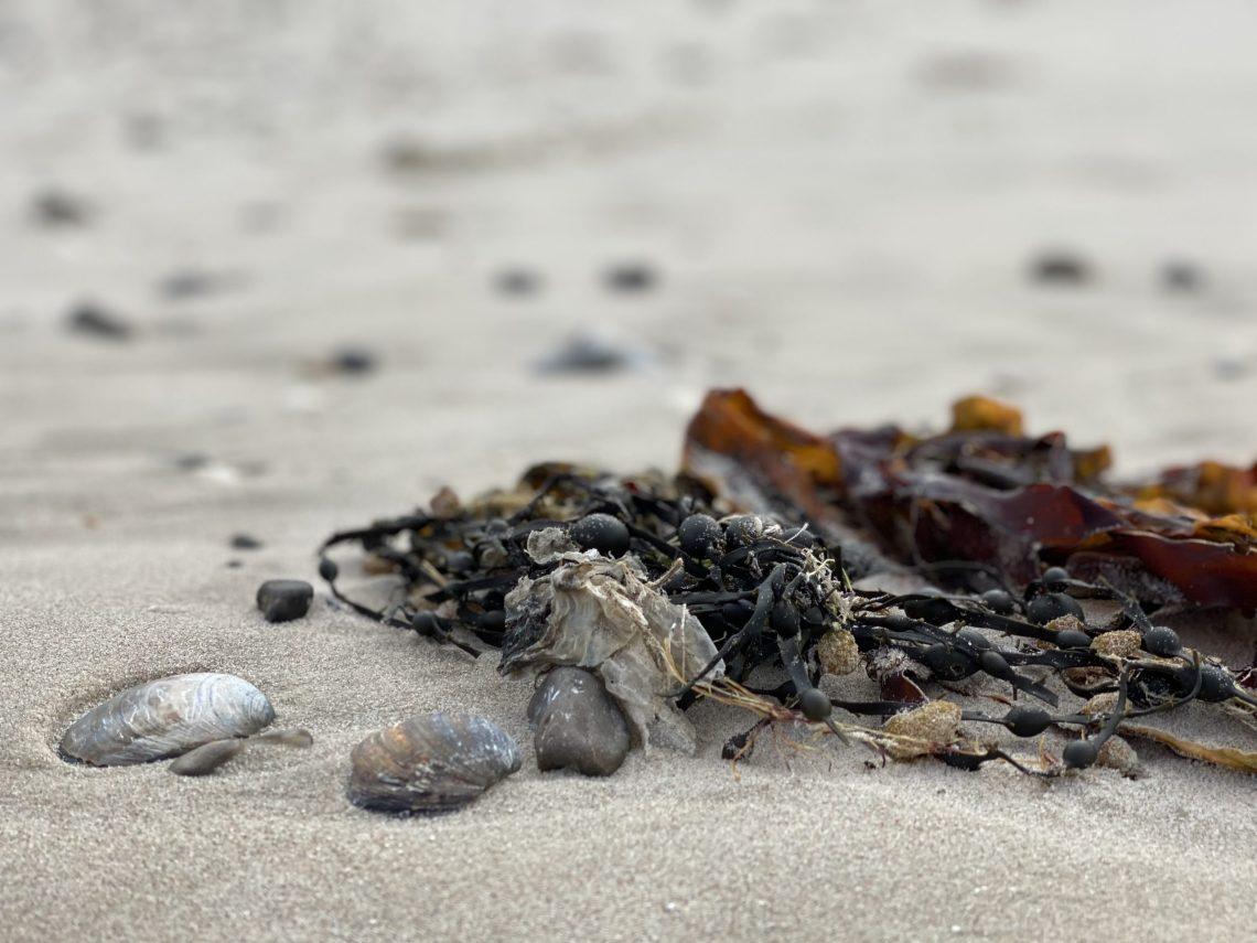 Så kom sommeren og ikke kun i kalenderen. I går aftes var der utrolig blødt, blidt og venligt her ved Vesterhavet.