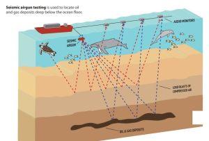 Saismic Airgun Testing - Article: Ransacking Nature