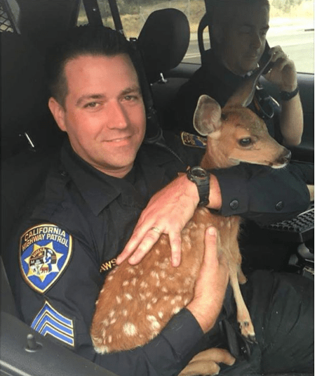 Highway Patrol holding Deer - Hell-Fire