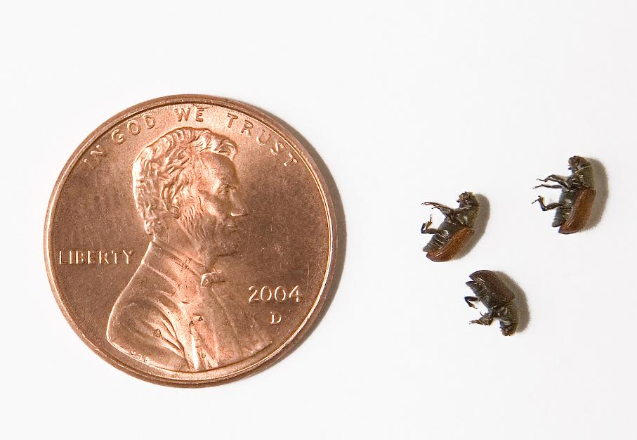 Bark beetles - Unprecedented Crime