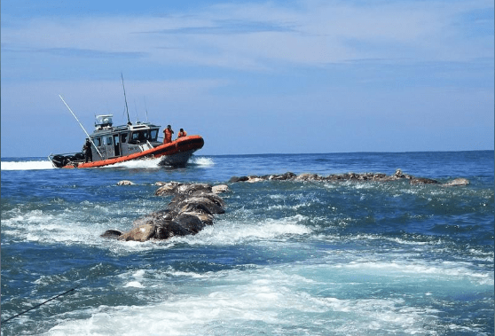 Mexican Government recording dead sea turtles