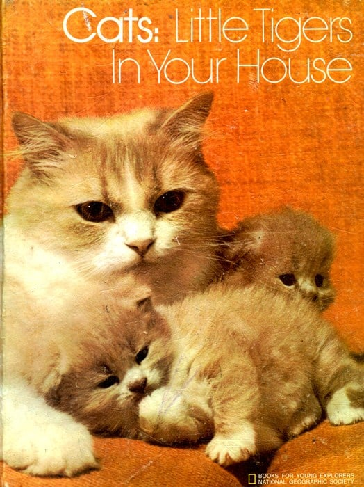 cats-little-tigers-in-your-house