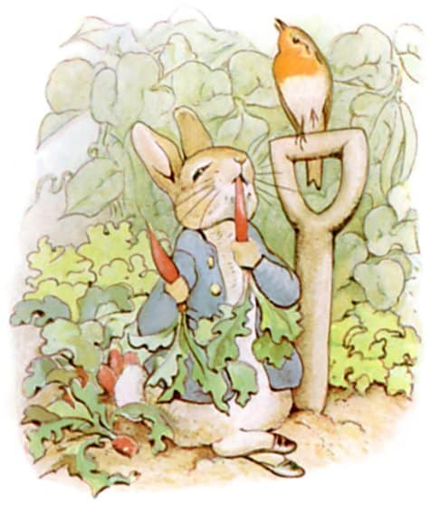 first he ate some lettuces peter rabbit