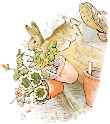 jumping out window peter rabbit