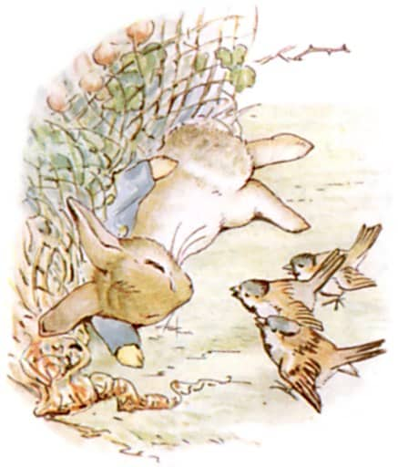 lying down ate too much peter rabbit