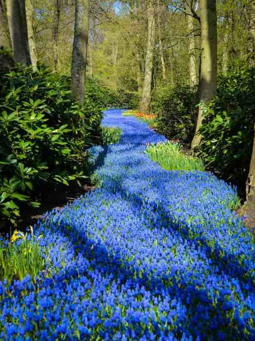 River of Flowers, Keukenhof, Netherlands