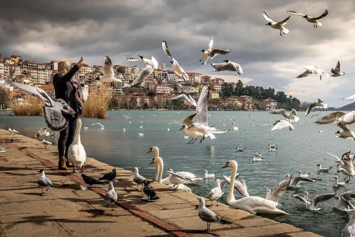 woman feeding birds