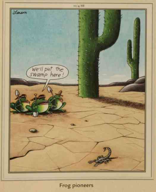 We'll put the swamp here frog pioneers