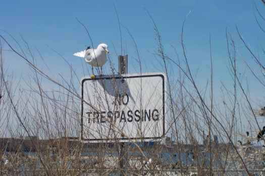 no trespassing seagull