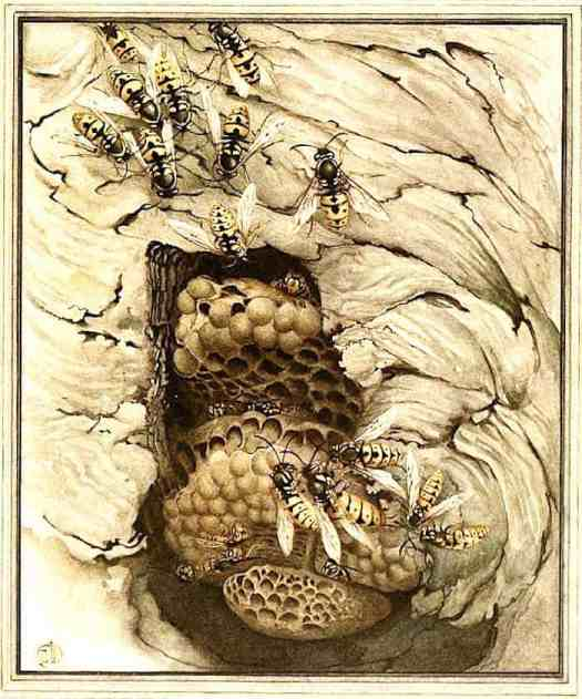 Edward Detmold illustration from 'Fabre's Book of Insects', 1921 cutaway