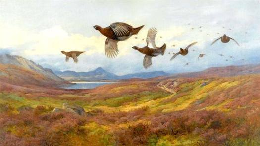 Archibald Thorburn (1860 - 1935) Swerving from the guns, red grouse