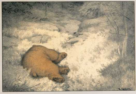 Bruin Asleep in the Blueberry Bushes. From Tirelil Tove series Theodor Kittelsen 1900