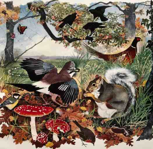 Shell Nature Studies by Rowland Hilder & Maurice Wilson