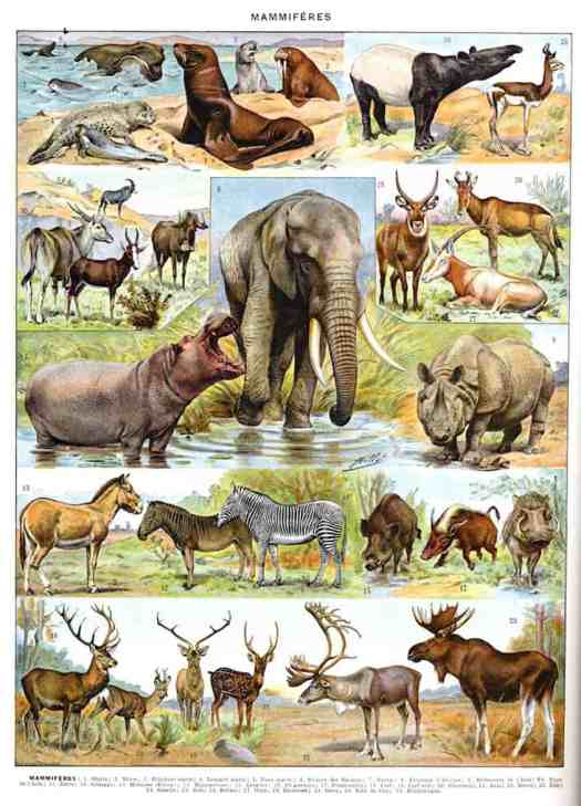 Adolph Millot-Mammals New Larousse Illustrated Universal Dictionary, between 1897 & 1907 wild animals