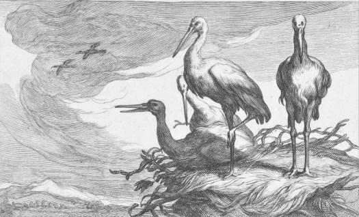 Storks in a nest, Frederick Bloemaert, after Abraham Bloemaert, after 1635 - 1670