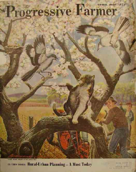 Mockingbirds and cat in tree April 1951