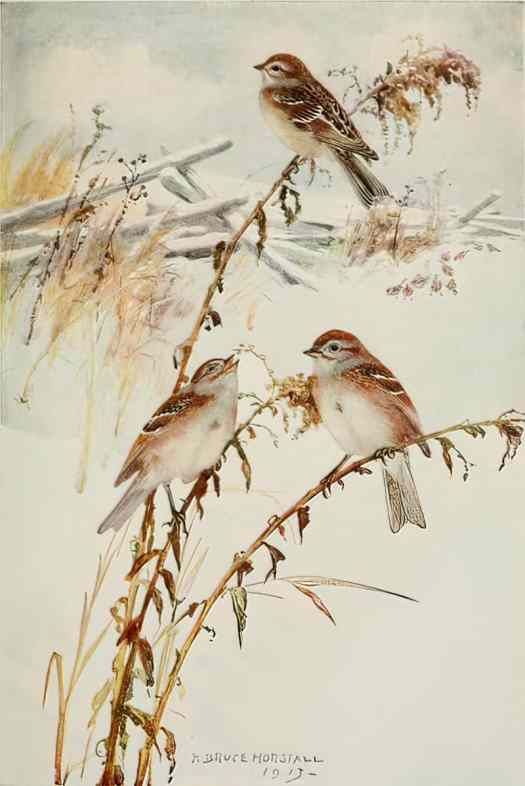 Bird Biographies A Guide-Book for Beginners by Alice Eliza Ball (1867-1948) Illustrated by Robert Bruce Horsfall (1869-1948) New York Dodd, Mead and Company, Inc., 1923 tree sparrow