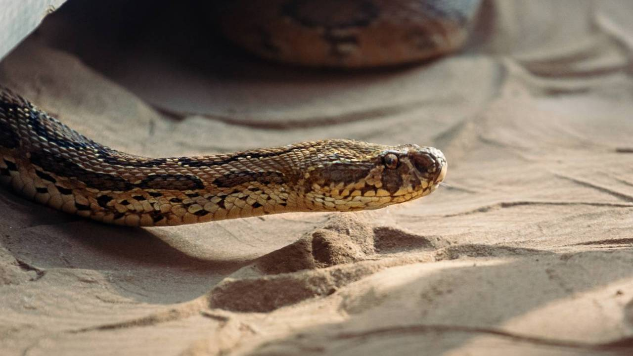 Novel coronavirus may have been transmitted to humans from snakes ...