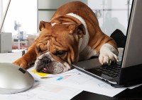 Pet-friendly offices often dont consider whether it works ...