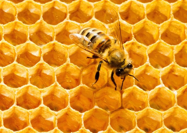 Image result for bee hexagon