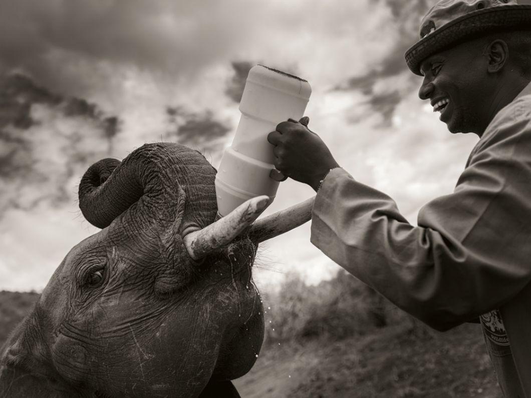 «Les gardiens s'occupent vingt-quatre heures sur vingt-quatre des bébés éléphants orphelins. Ils dorment avec eux dans les abris et leur donnent du lait toutes les trois heures. Ils sont une famille de substitution pour eux. Même quand les éléphants retournent à l'état sauvage, ils se souviennent de leurs gardiens toute leur vie.»