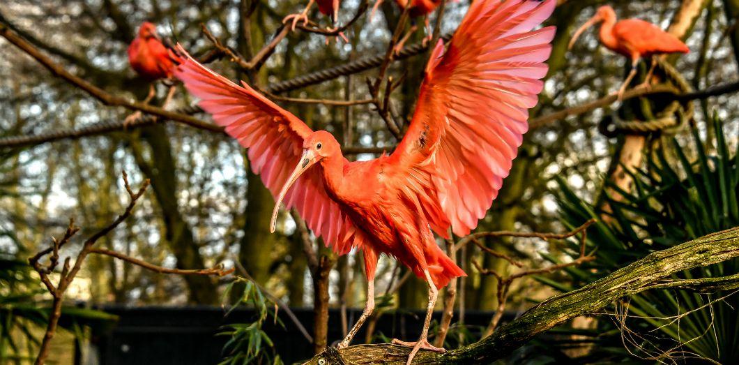 Un ibis au zoo de Lille, en février 2019. | Philippe Huguen / AFP