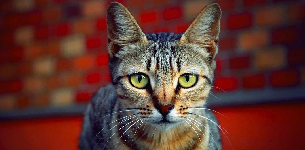 cat | Jimmy B via Flickr CC License by