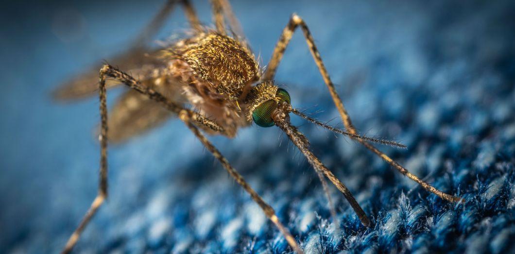 Les moustiques anophèles mâles ne piquent pas. | Егор Камелев via Unsplash