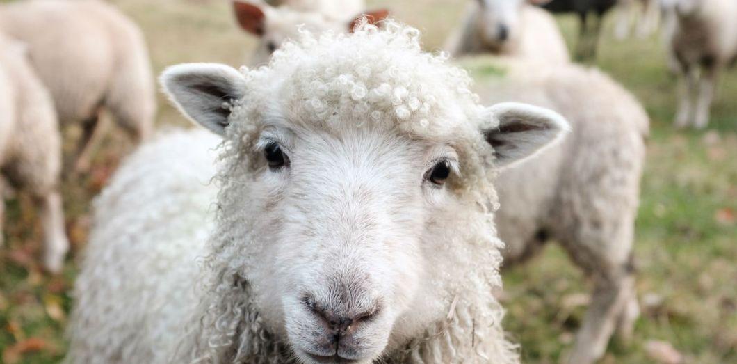 Changez de mode de vie avant de devenir chèvre.   Sam Carter via Unsplash