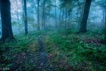 Dense fog on LHHT