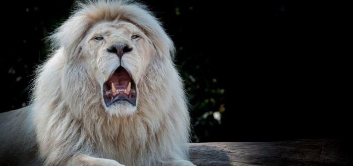 tut lvi