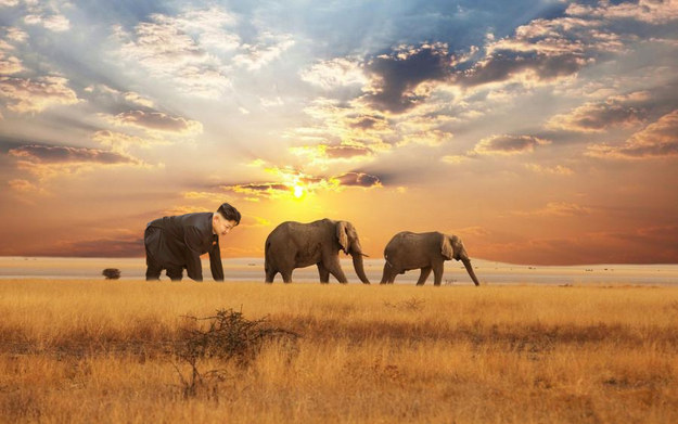 Kim Jong Un testet Elefantenherde in freier Wildbahn unter der Sonne Steppe