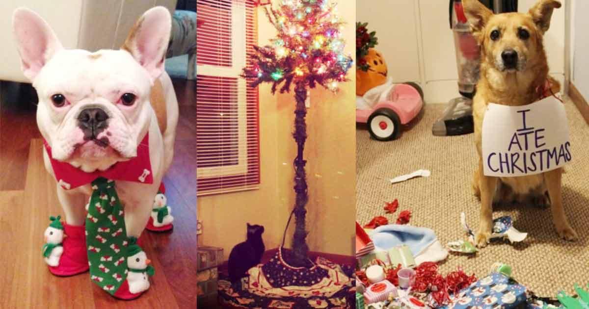 tiere und weihnachten muss auch mal sein sleazemag. Black Bedroom Furniture Sets. Home Design Ideas