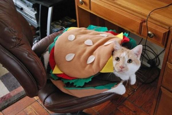 burger-cat-halloween-costume-jpg