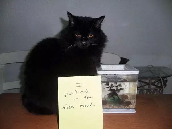 catshaming