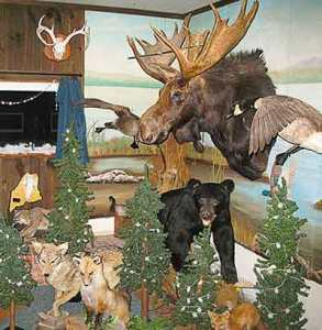 Pine Lodge Hunting Camps trophies