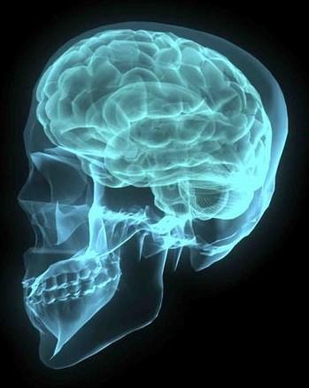 brain and sleep