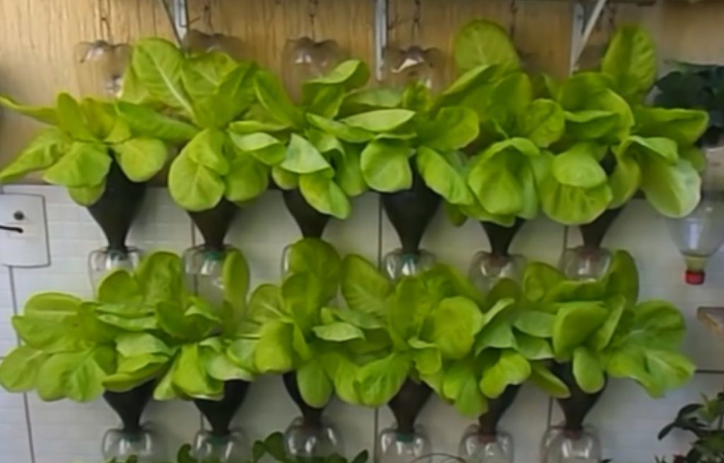 Cheap Containers Vegetable Gardening