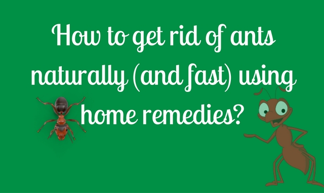 Get Rid Of Fire Ants Fast Naturally Without Chemicals