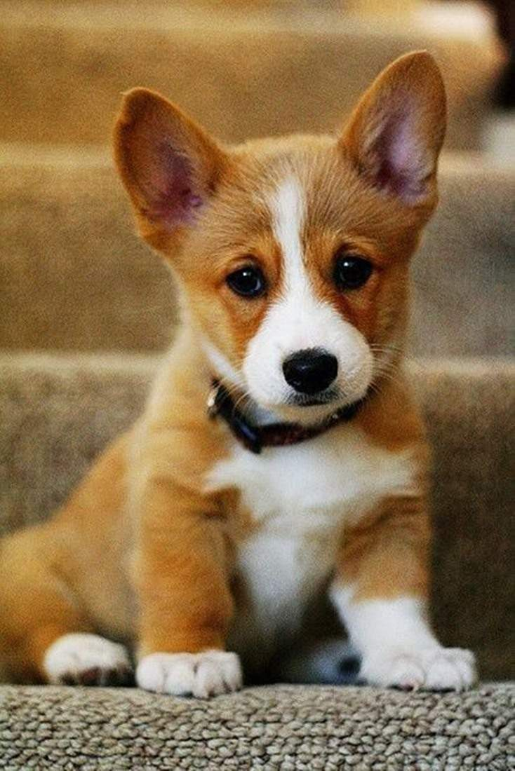 10 Absolutely Adorable And Cute Funny Animals 8