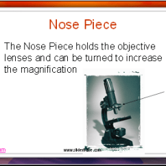 Parts Of The Nose Diagram 99 Tahoe Radio Wiring Microscope - Presentation Cell Biology Sliderbase