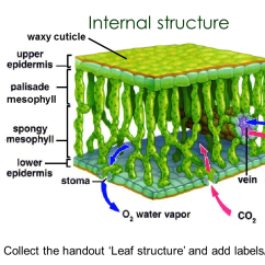 Structure Of Stomata With Diagram Honeywell Thermostat Tahoma Glucose Molecule - Sliderbase