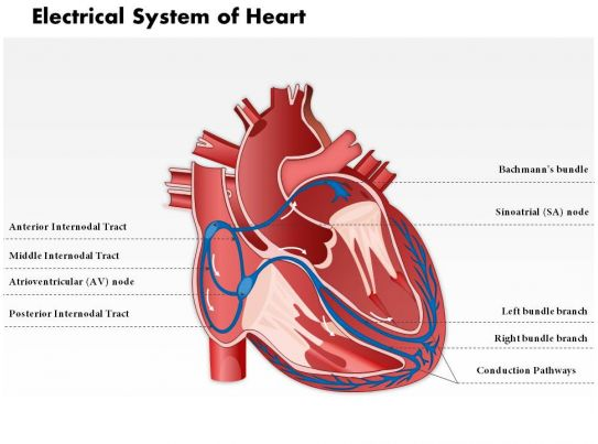 Ladder Diagram Definition 0514 Electrical System Of Heart Medical Images For