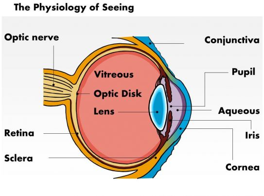 5 3 defense diagram 2003 harley radio wiring 0514 physiology of seeing eye anatomy medical images for powerpoint   templates ...