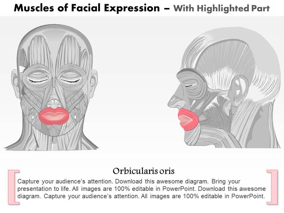 how many triangles are there in this diagram 06 f150 headlight wiring 0514 front and side views of the muscles facial expressions medical images for powerpoint