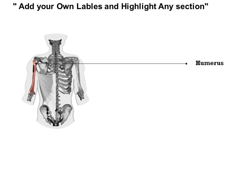 0714 Human Bony And Muscular System Posterior Medical