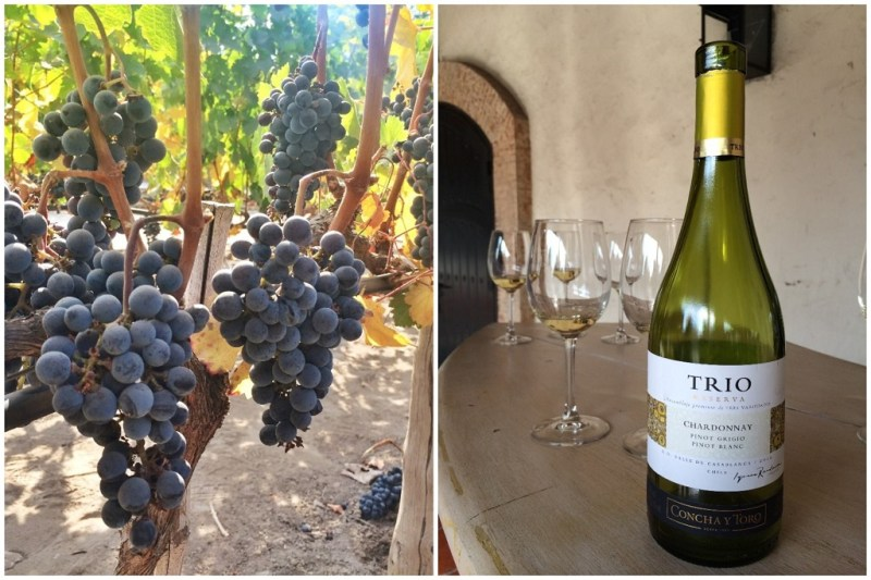 the Concha y Toro winery tour was one of the most fun afternoons!