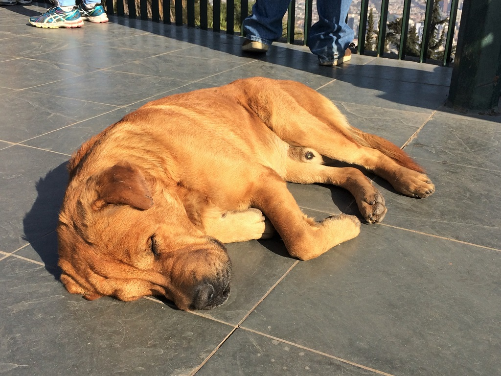 sleeping puppies collection santiago slightly astray