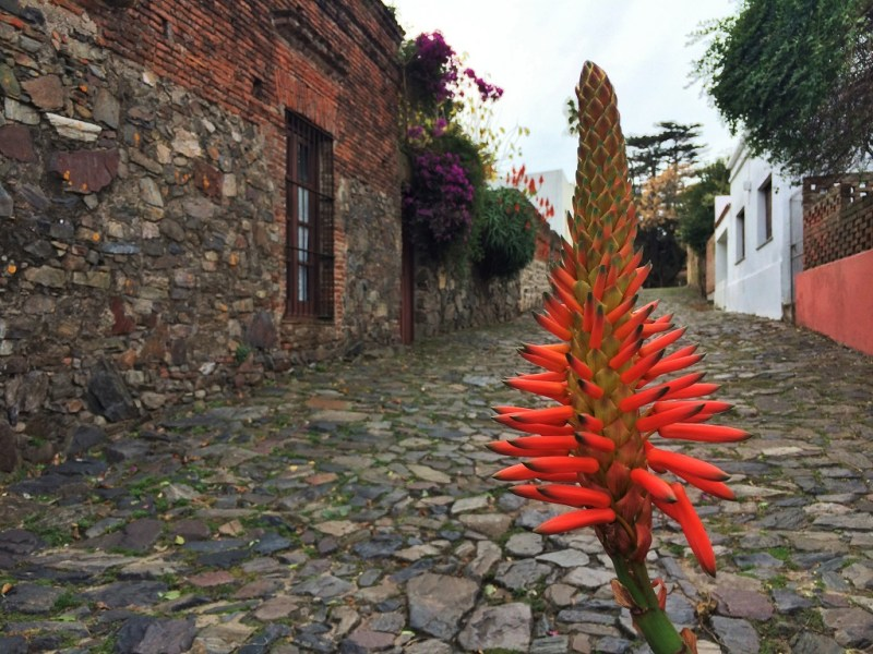 colonia cobblestone road 1