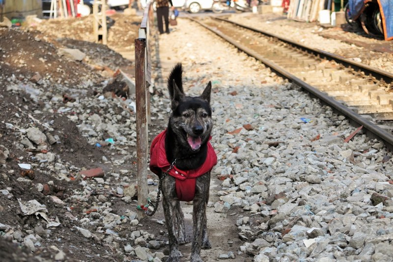 an adorably scruffy dog by the rail tracks